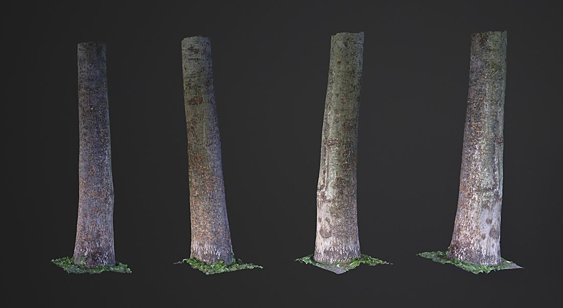 Łukasz Liszko - 3D scans / photogrammetry - Tree